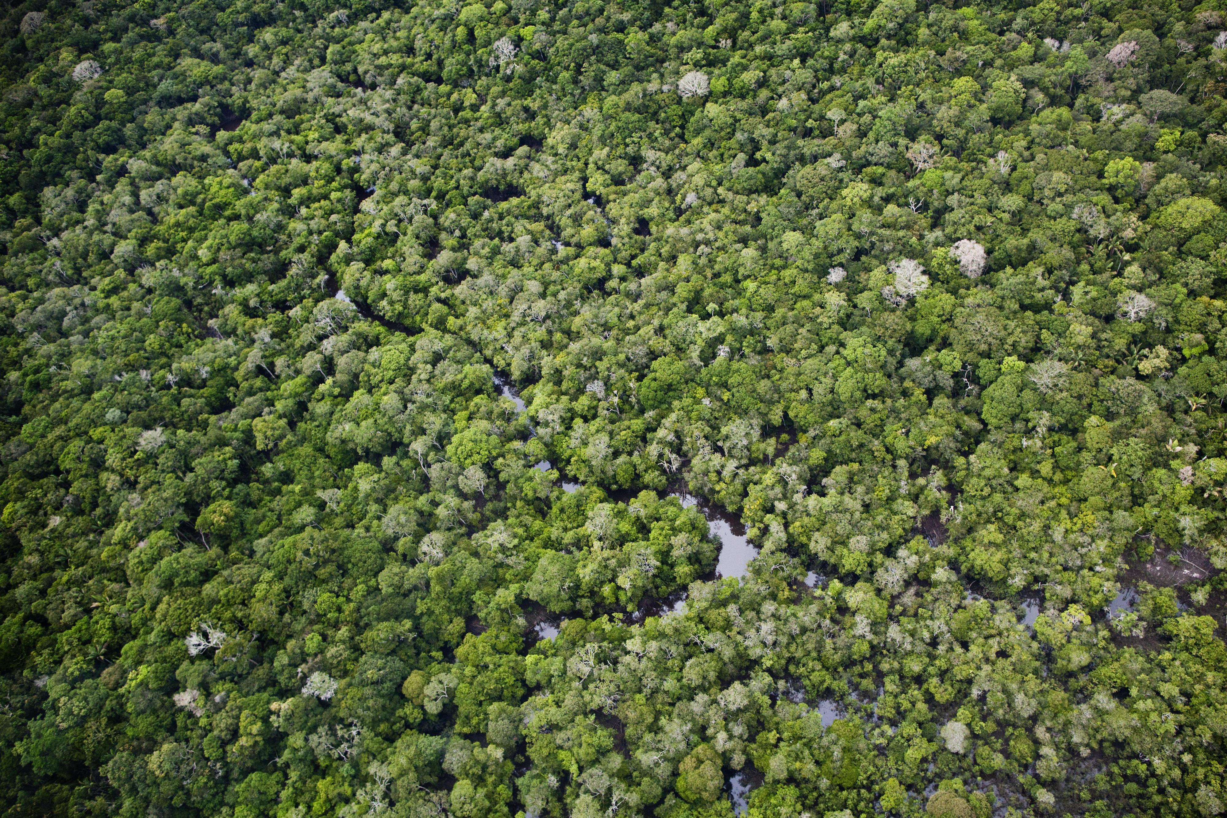 Luftaufnahme des Regenwaldes im Nationalpark Anavilhanas in Manaus, Brasilien
