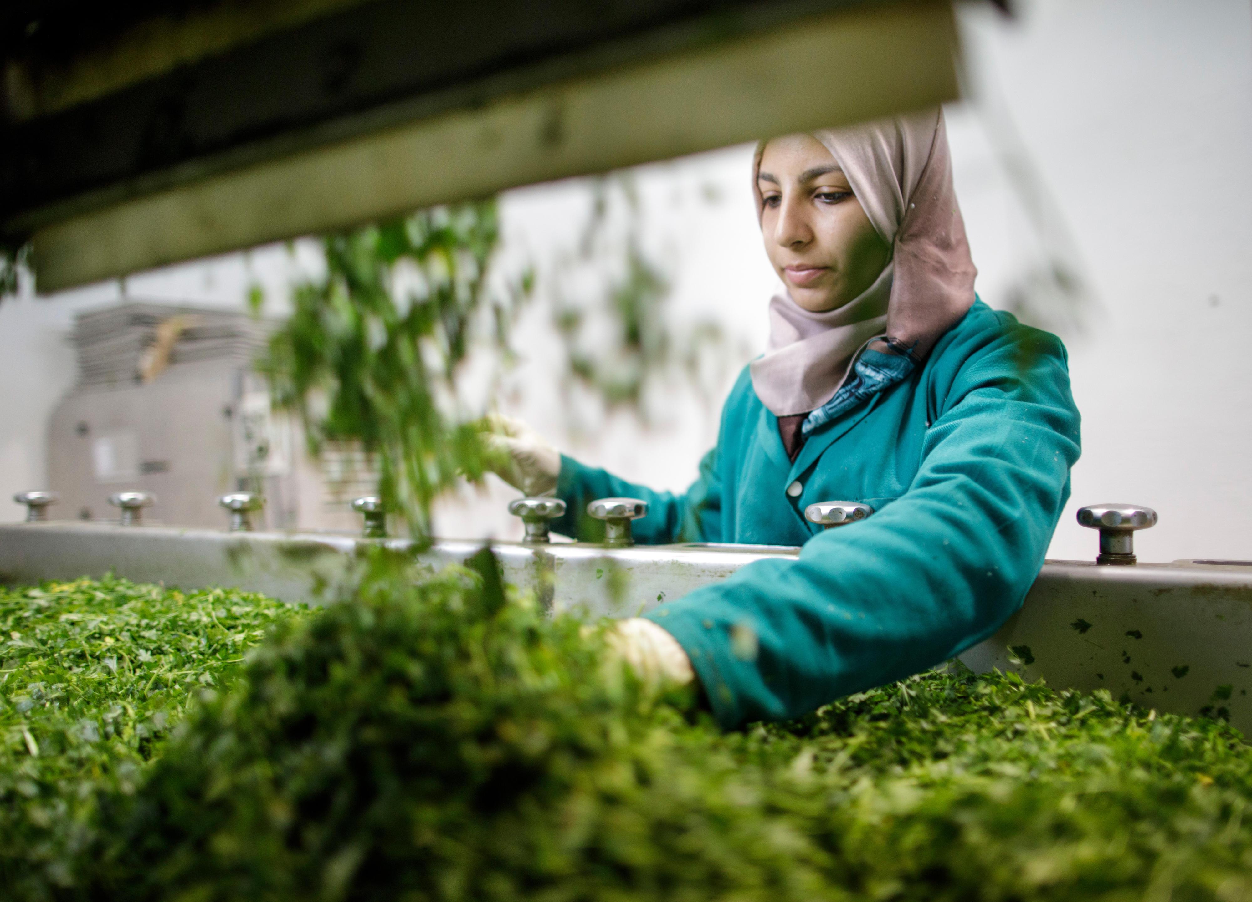 Herstellung von Bio-Trockenkräutern in Tunesien