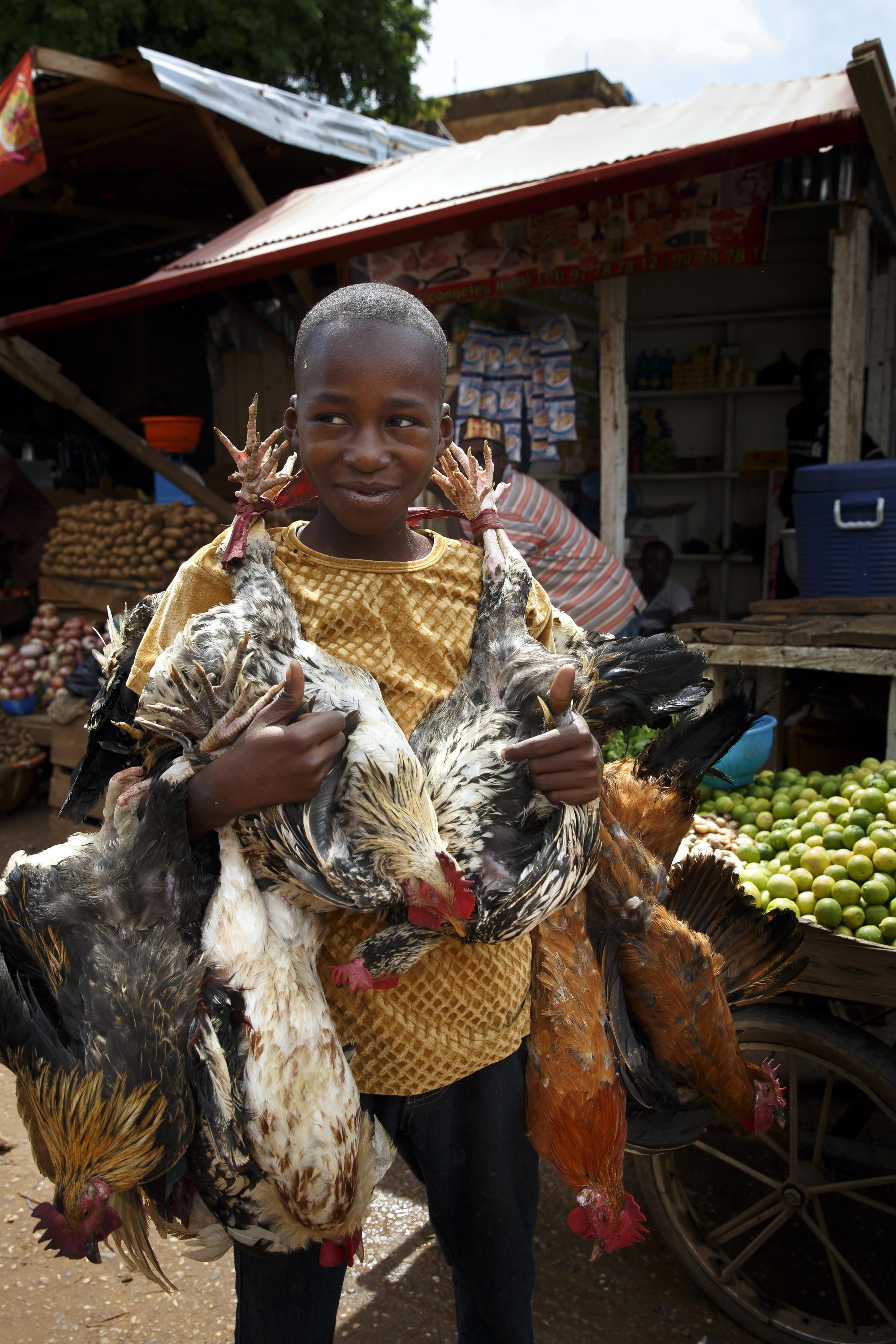 Ein Junge trägt lebende Hühner über den Markt in Niamey.