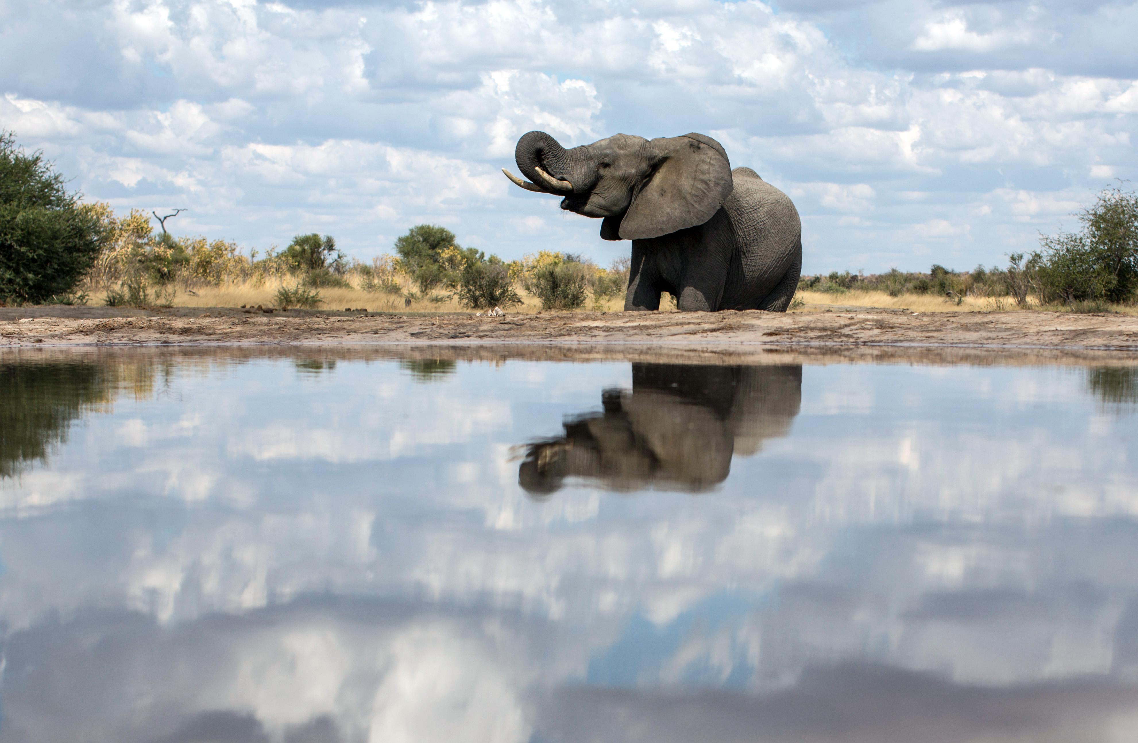 Elefant an einem Wasserloch im Khaudum-Nationalpark in Namibia