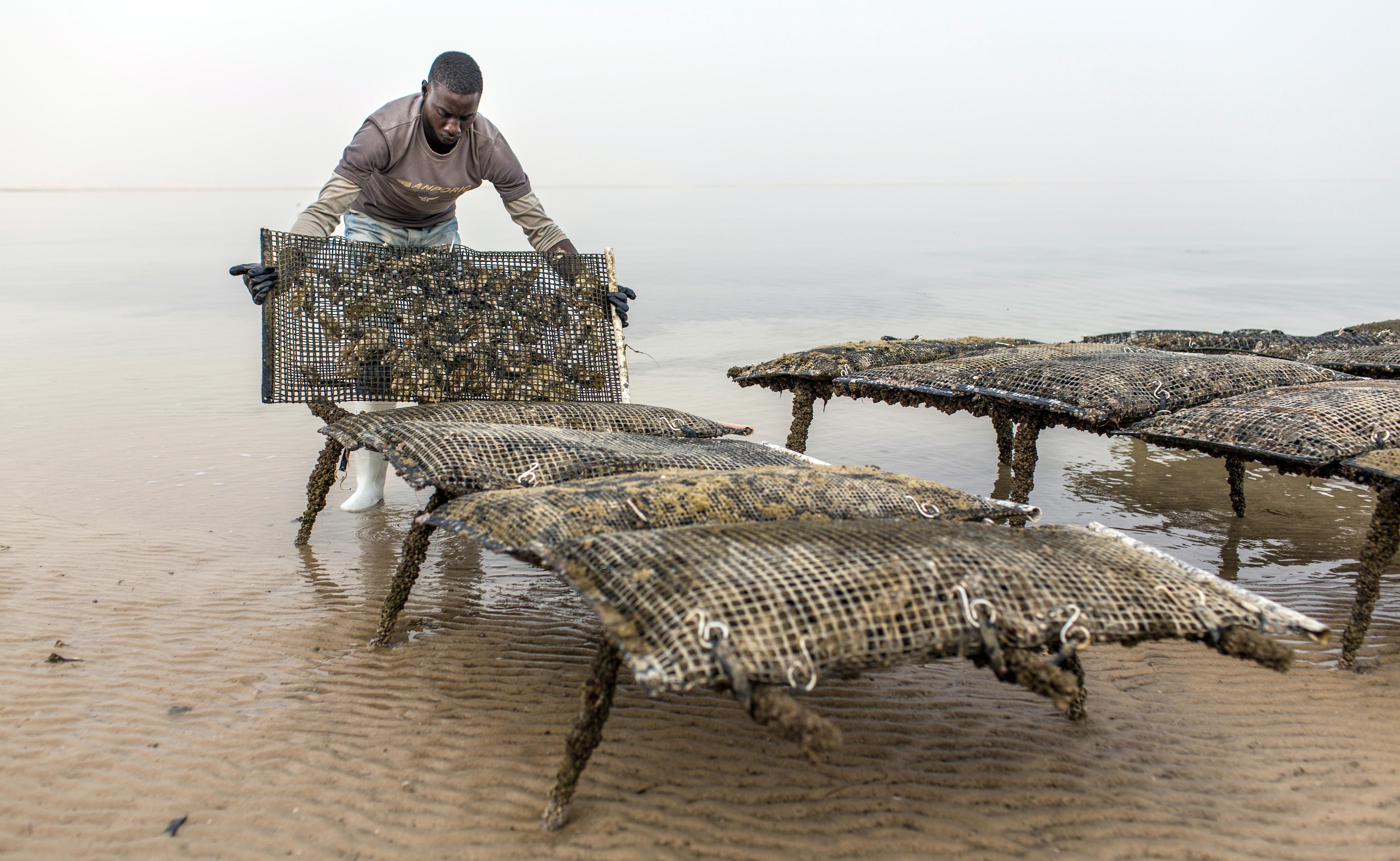 Austernzucht bei Nouadhibou, Mauretanien