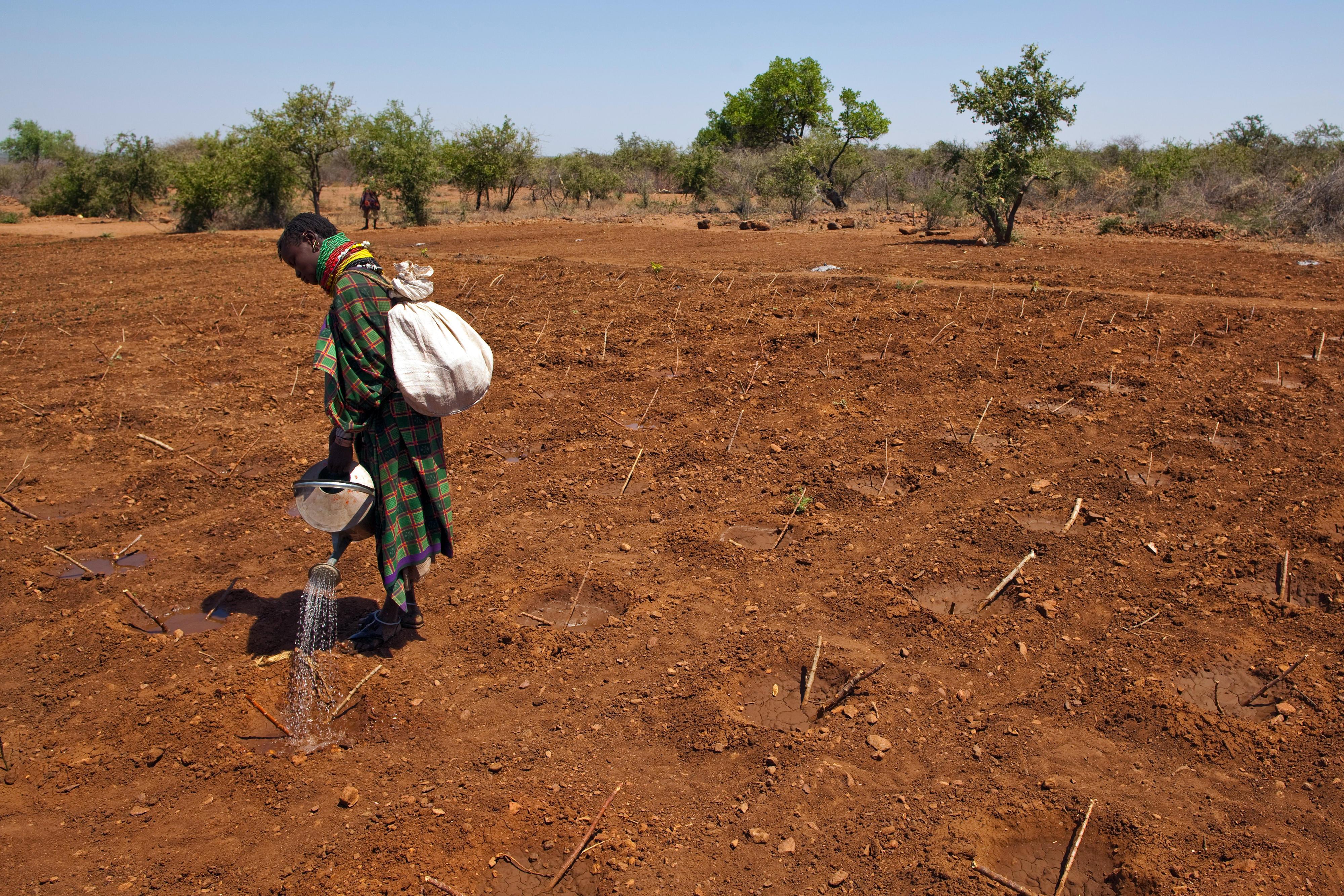 Feldarbeit in Nordkenia