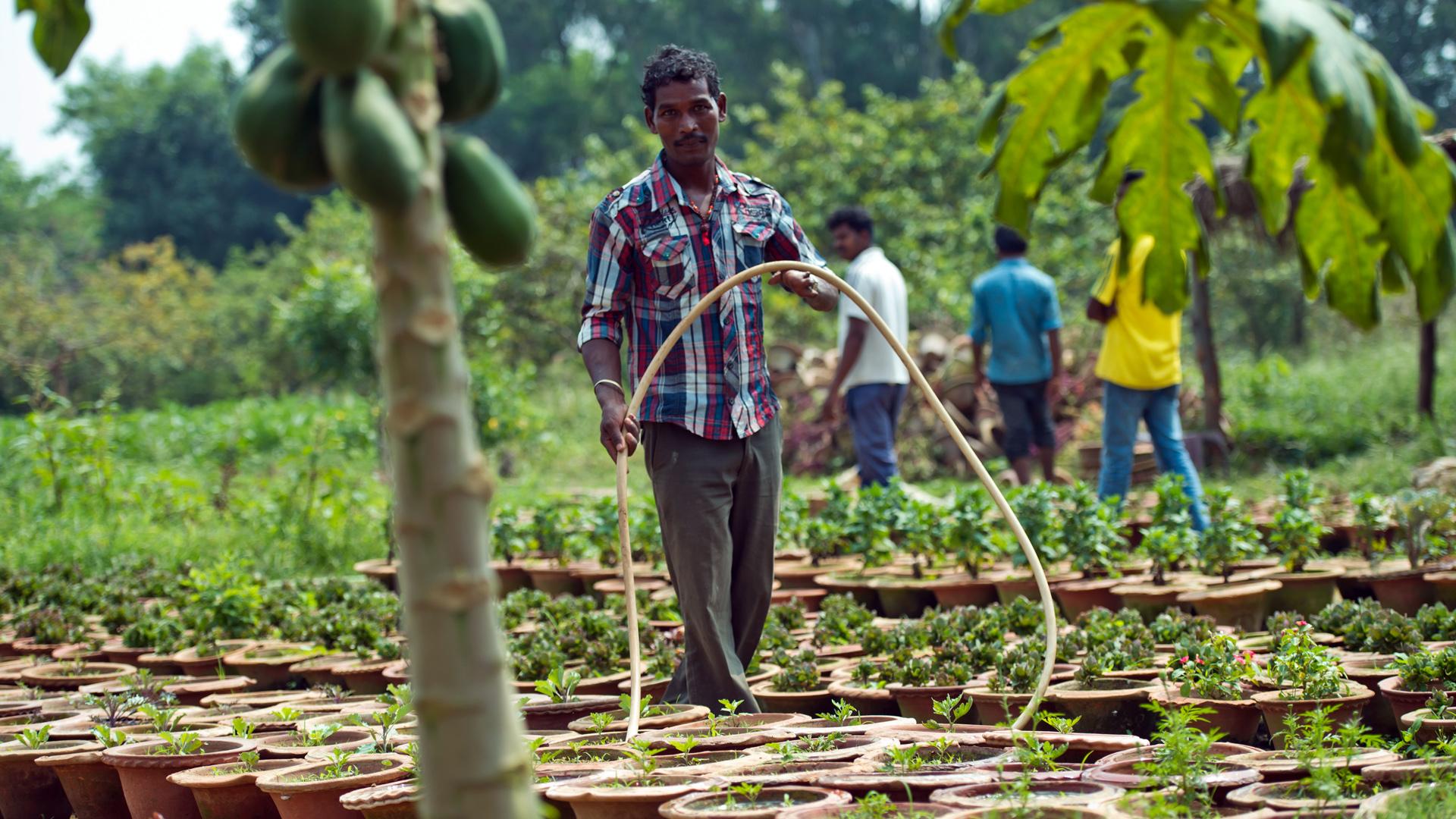 Ein Mann bewässert Pflanzen im Grünen Innovationszentrum in Rukka, Indien, das vom BMZ mit aufgebaut wurde.