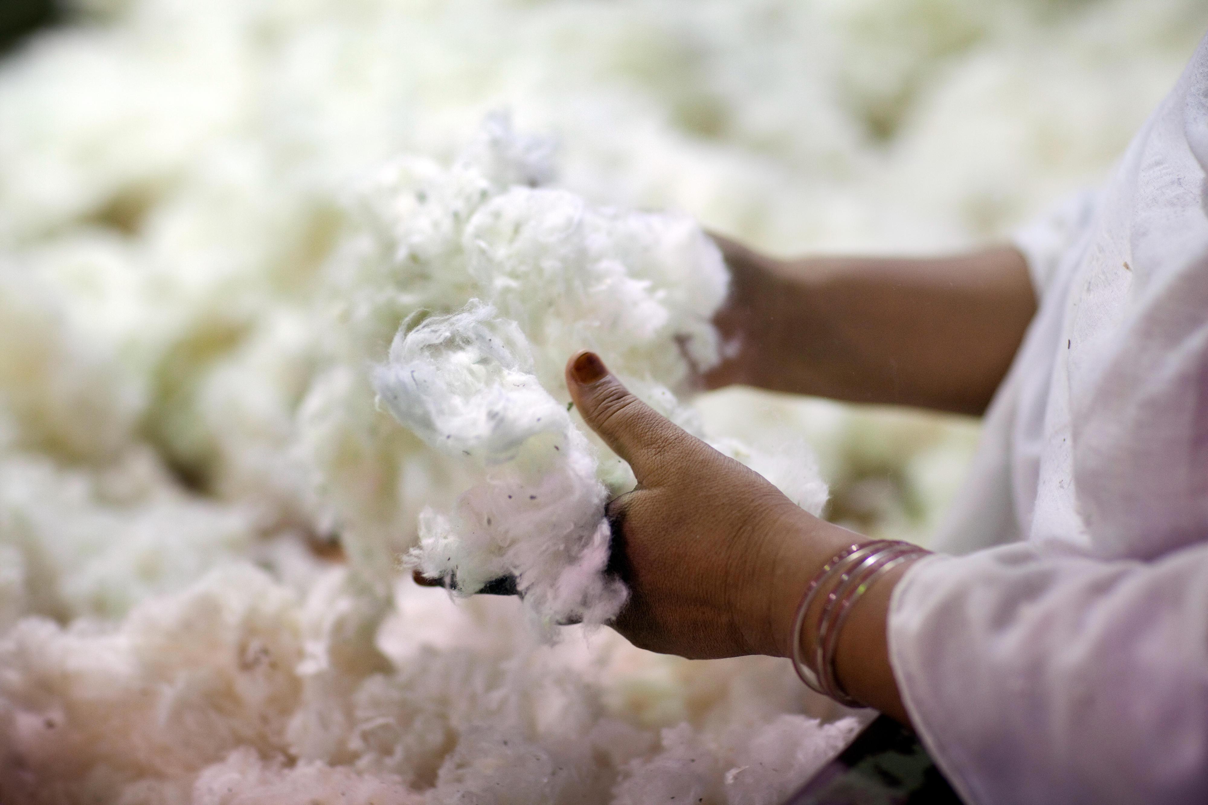 In einer Textilfabrik in Faisalabad, Pakistan, wird Baumwolle auf Verunreinigungen untersucht.