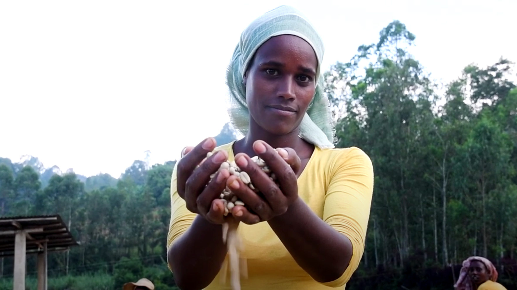 Still image from the video: Coffee and honey from the forests of Ethiopia
