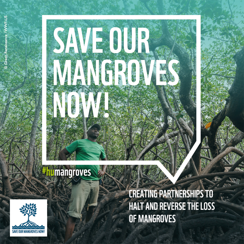 """Cover """"Save Our Mangroves Now!"""""""