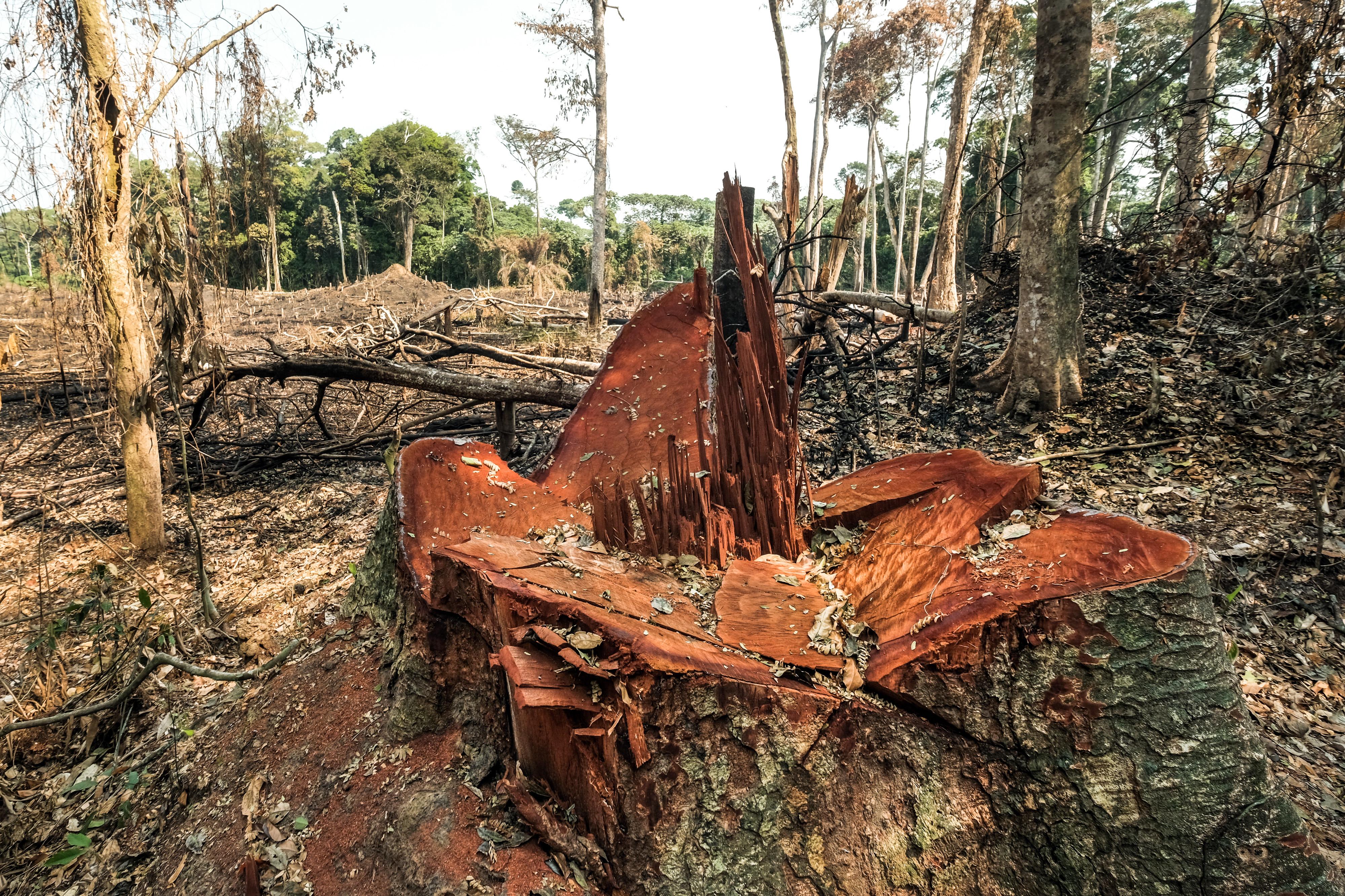Entwaldung in der Nähe von Yangamba, Demokratische RepublikKongo