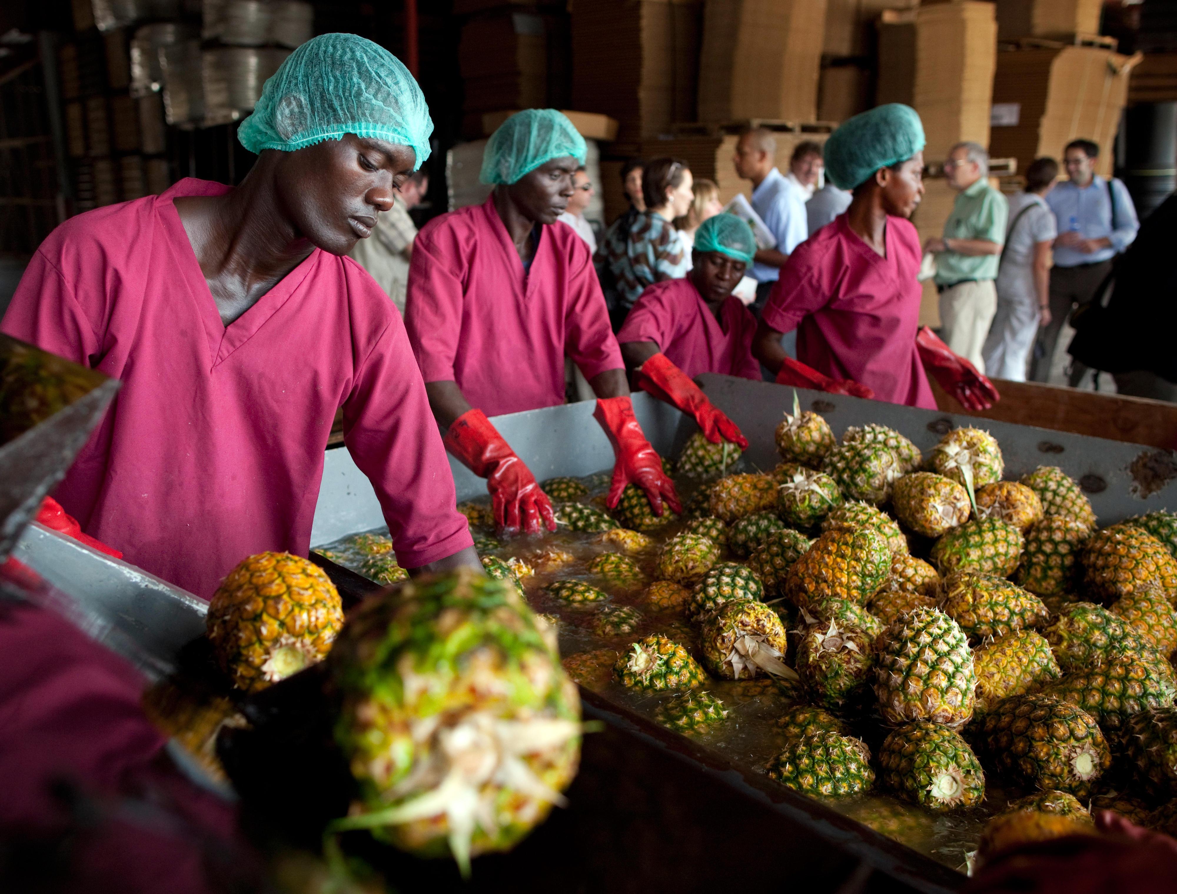 Herstellung von Fruchtsaft für den Export auf den europäischen Markt (Asamankese, Ghana)