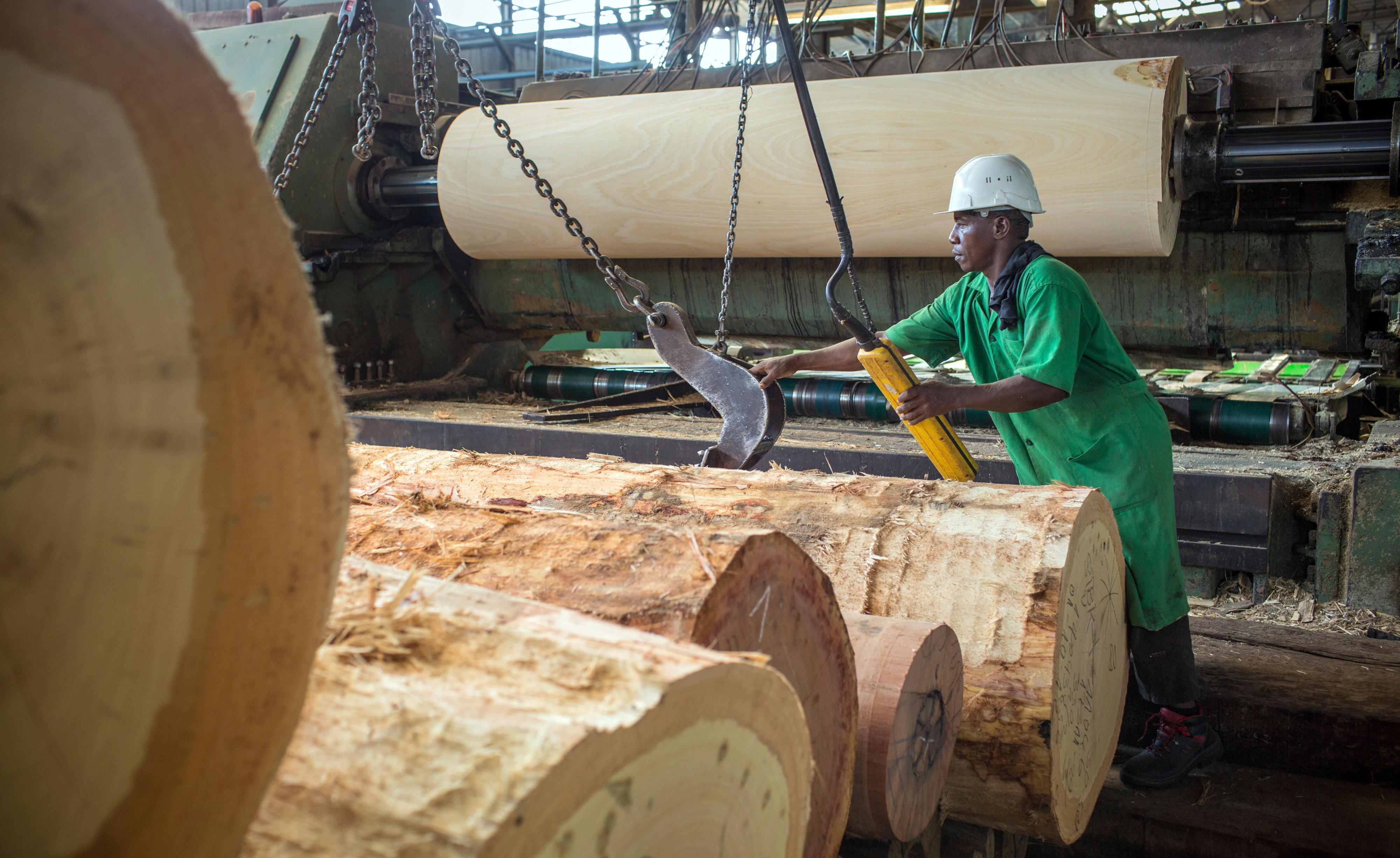 Furnierproduktion in einem Betrieb in Douala, Kamerun