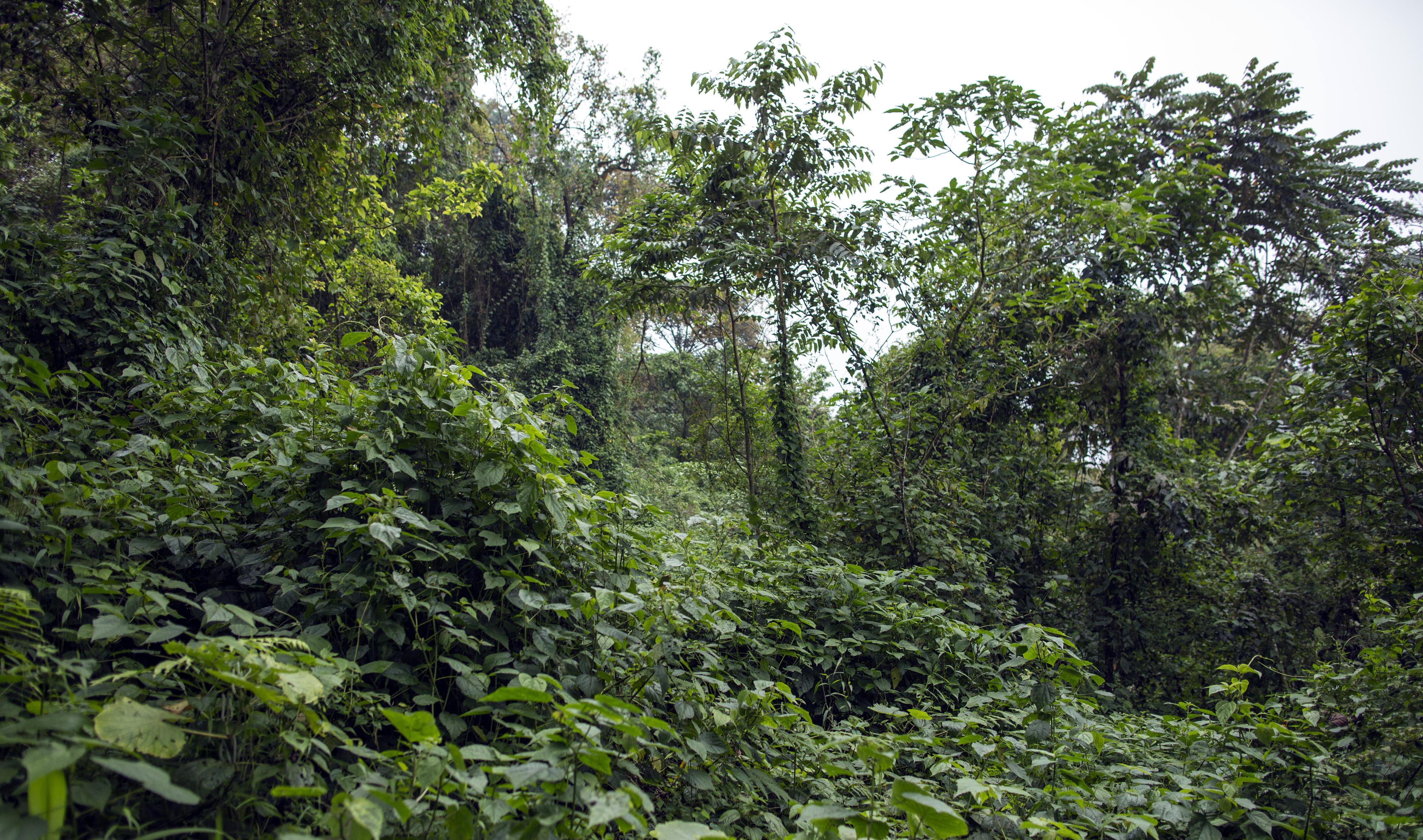 Regenwald im Mount Cameroon Nationalpark