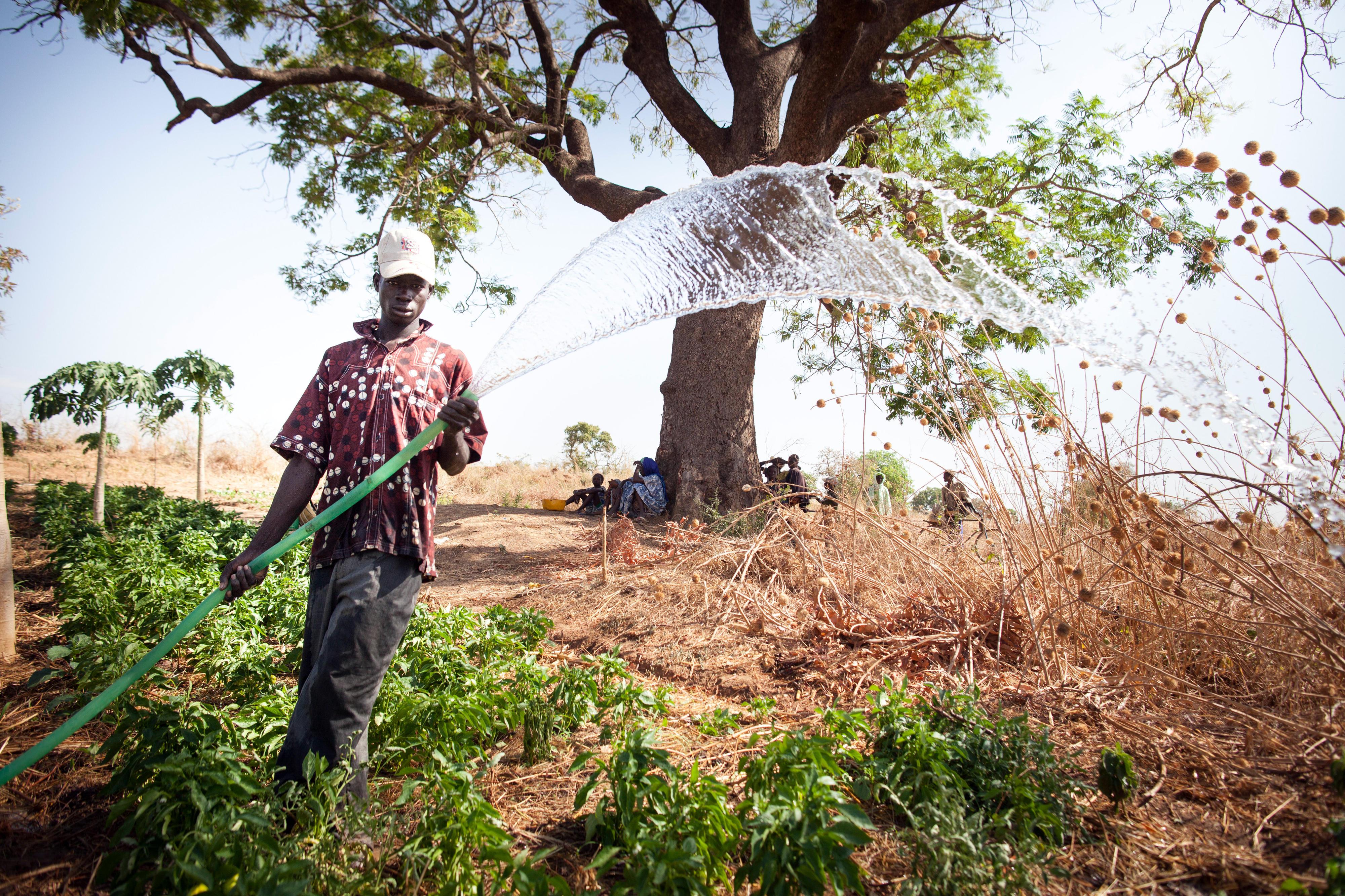 Ein Bauer des Kleinbewässerungsprojekts Beledougou, Mali, bewässert sein Feld.