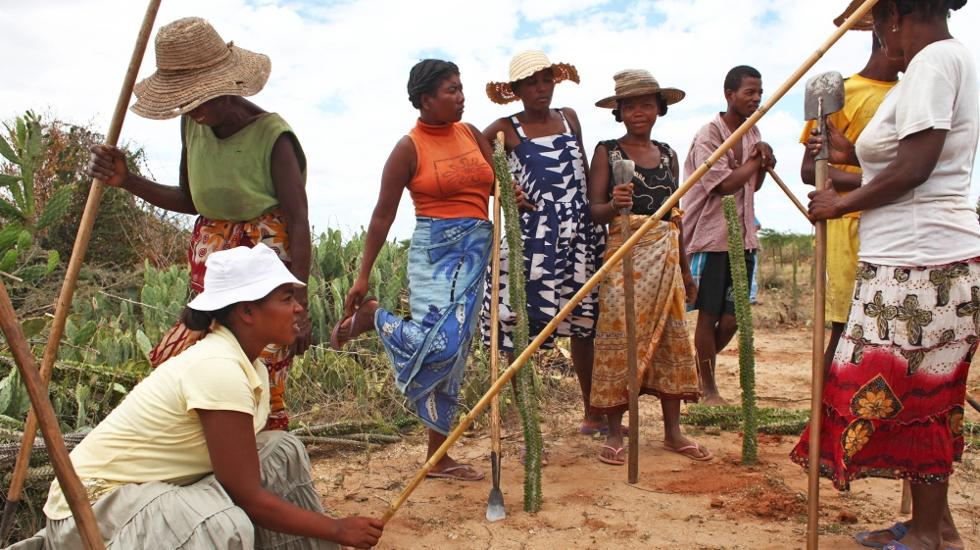 Bewohner des Dorfes Ankirikiriky in Südmadagaskar forsten entwaldetes Land wieder auf. Im Gegenzug erhalten sie Lebensmittelrationen des Welternährungsprogramms.