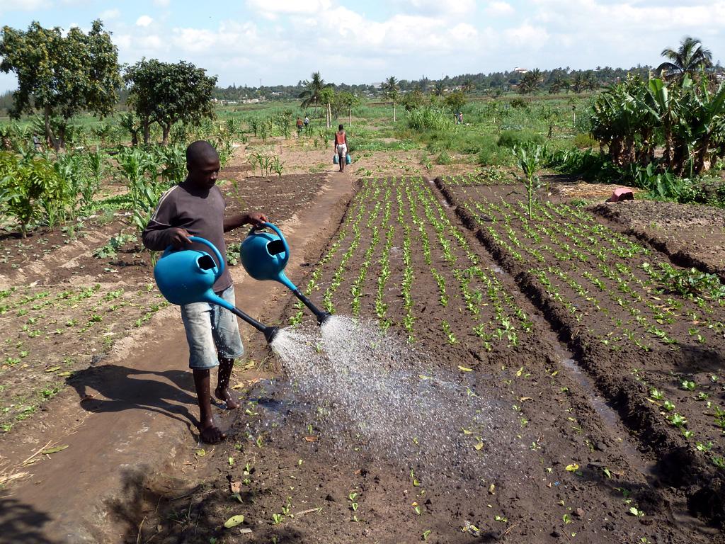 Gemüseanbau in Mosambik