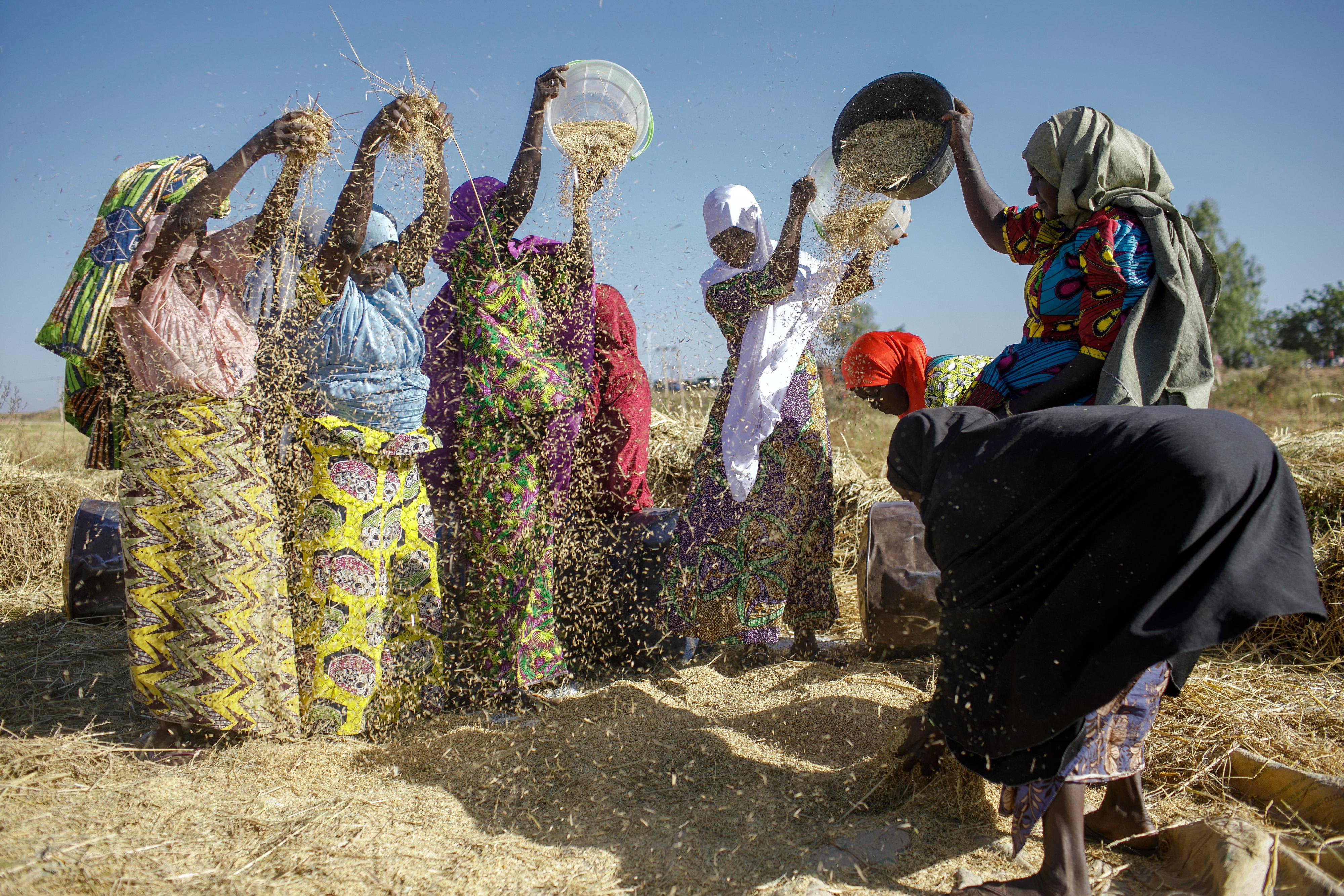 Frauen beim Reisdreschen in Sunu