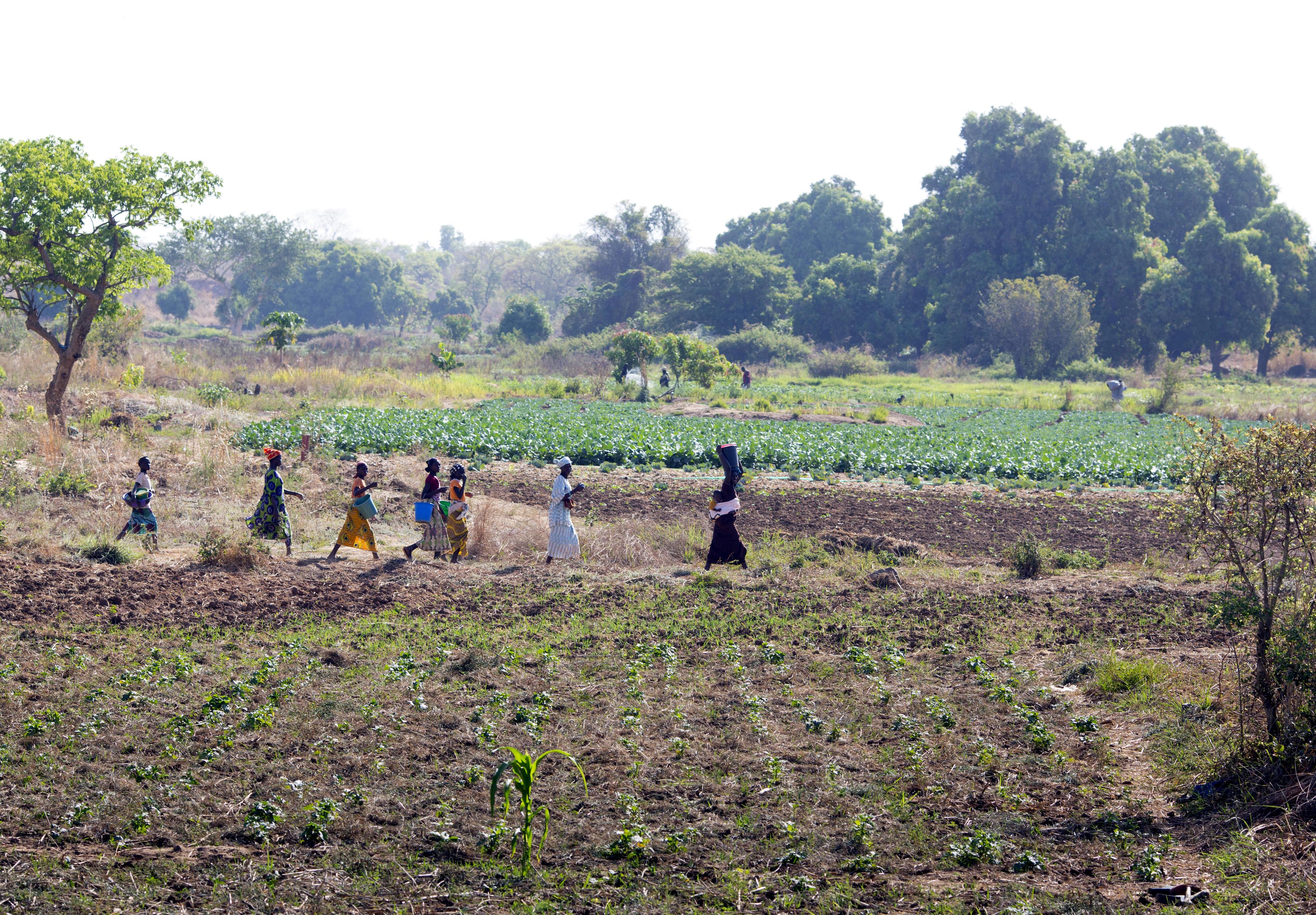 Bäuerinnen auf dem Weg zum Feld in Beledougou in Mali