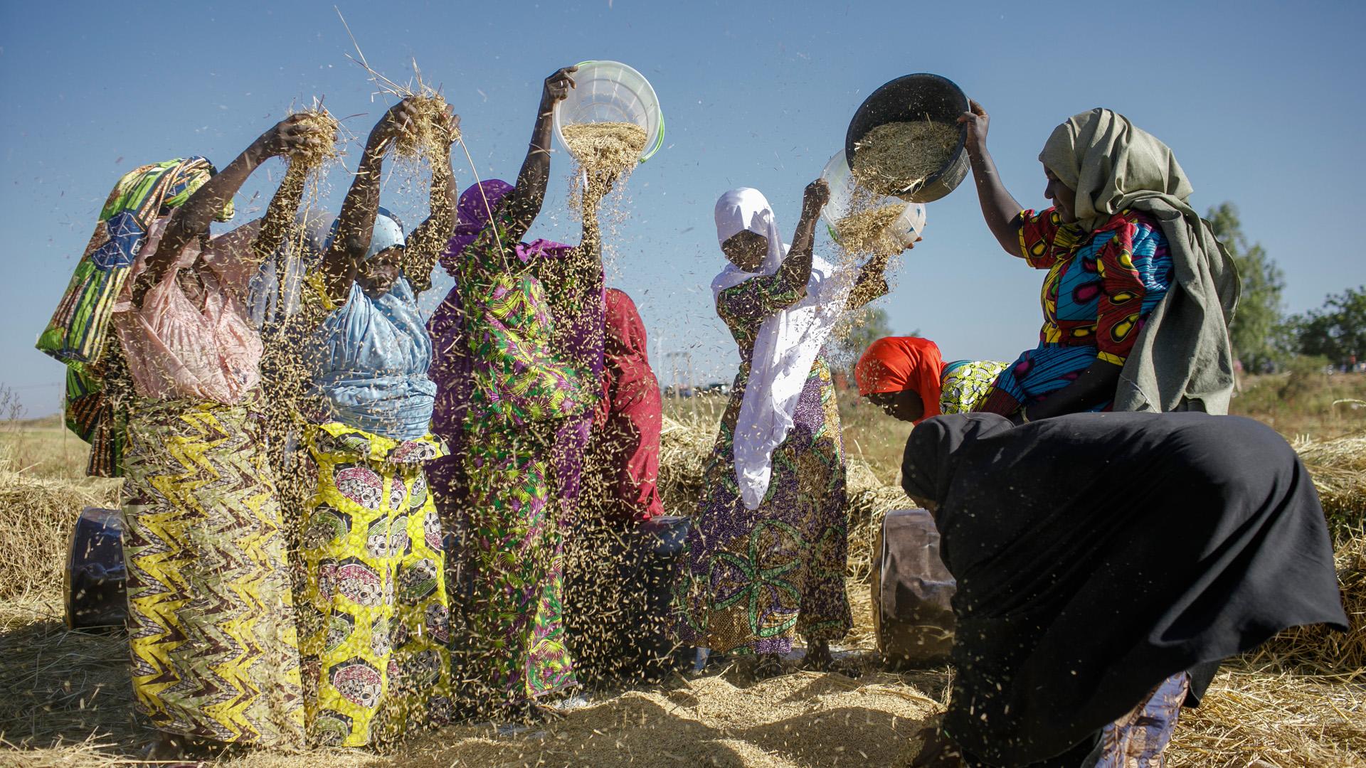Frauen beim Reisdreschen in Sunu, Nigeria