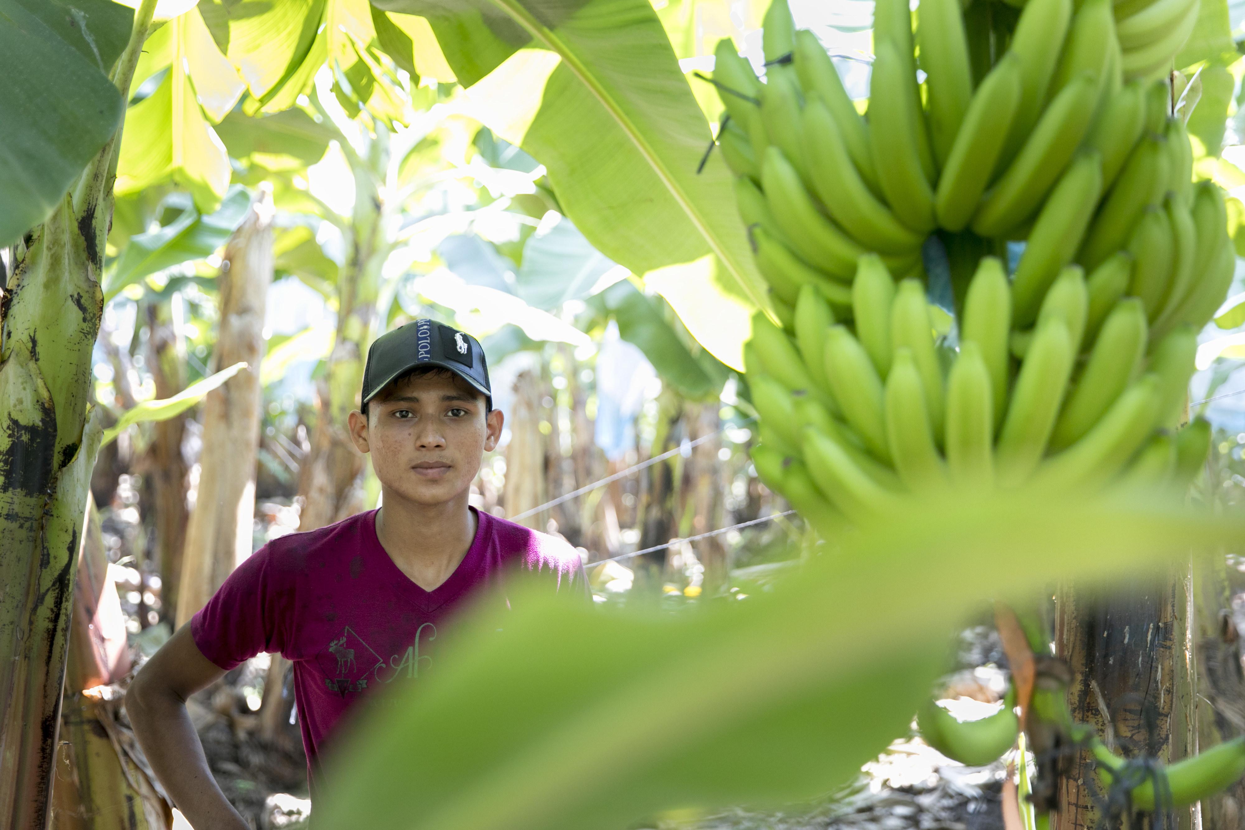 Arbeiter auf der Bananenplantage Ejido Miguel Aleman in Suchiate in Mexiko