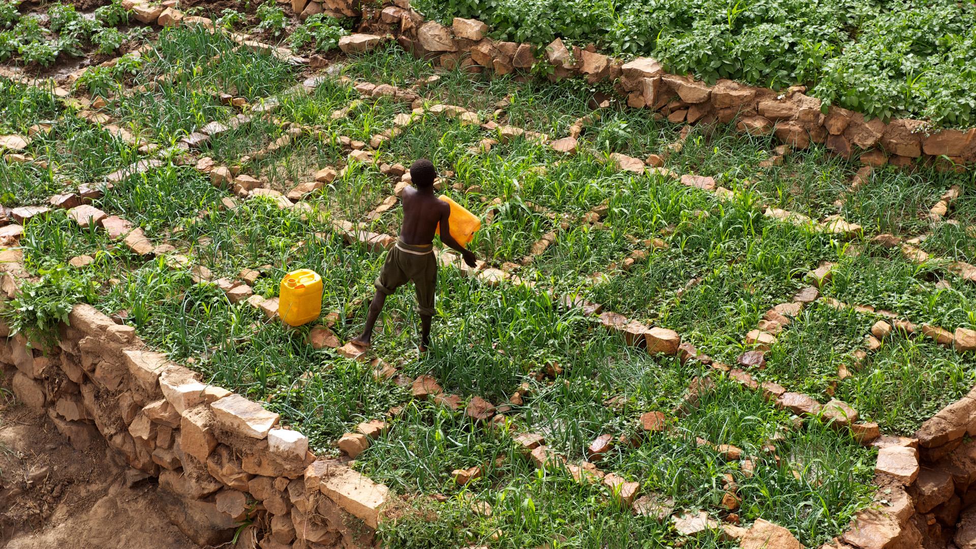 Ein Bauer in Mali bewässert sein Feld.