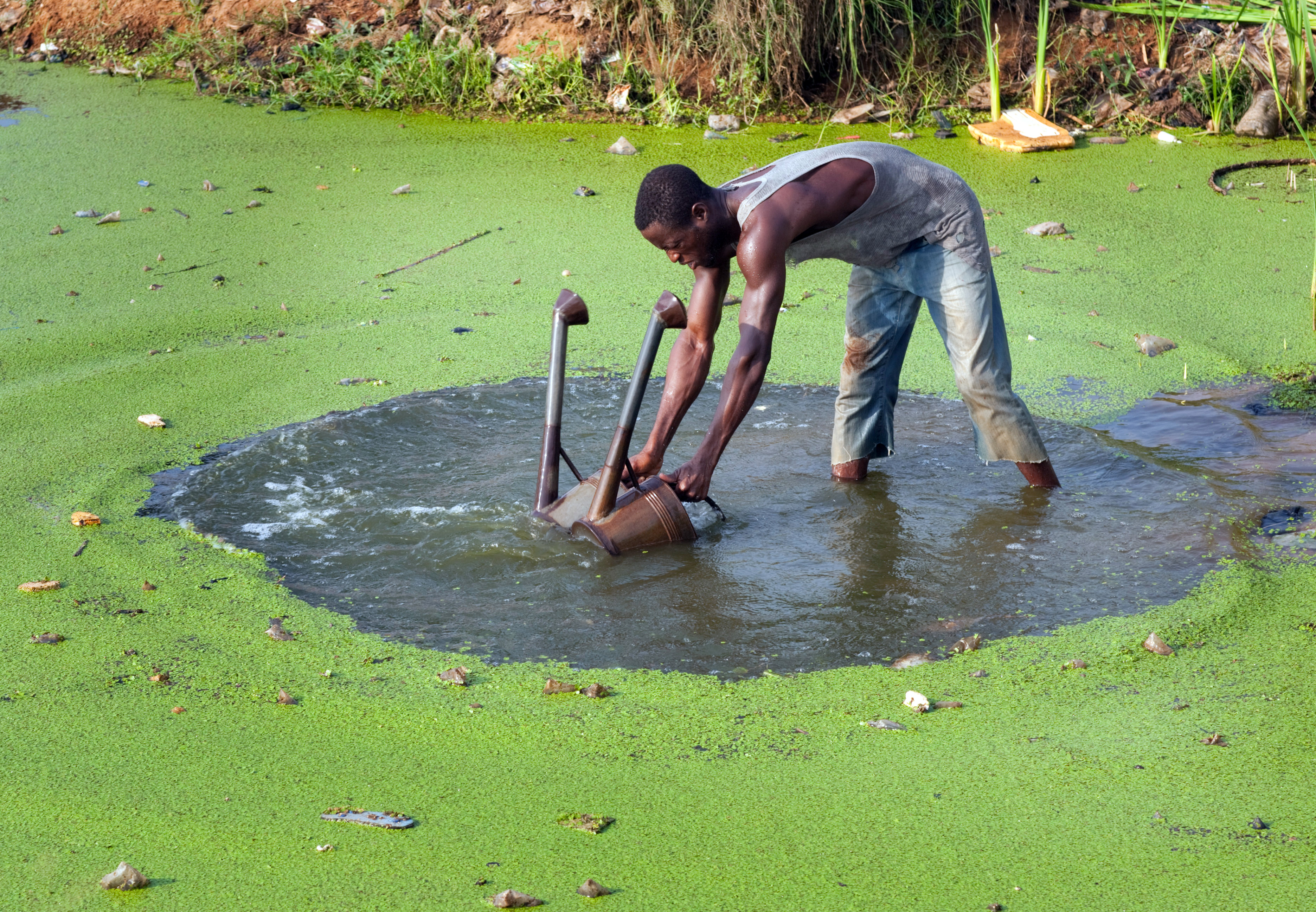 A farmer in Togo draws water from a pond to irrigate his fields.