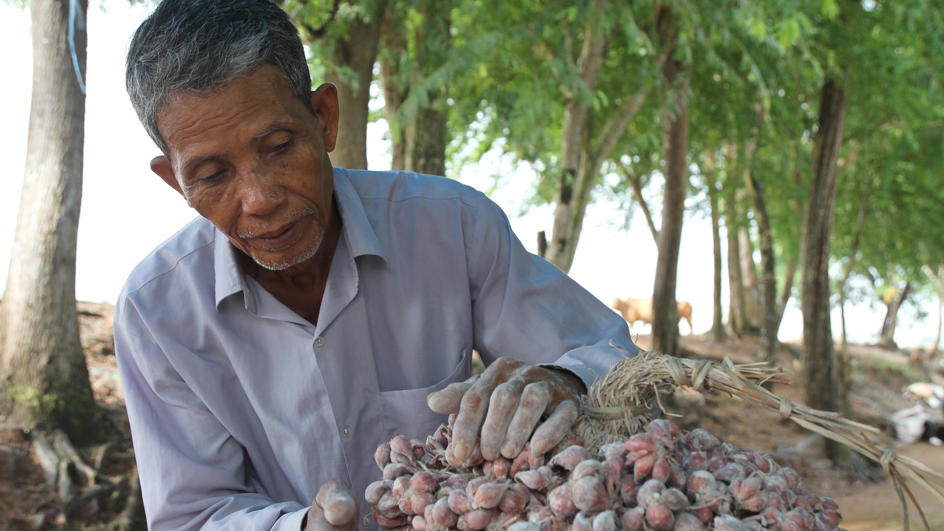 Ein Bauer mit Mangrovensamen und Setzlingen