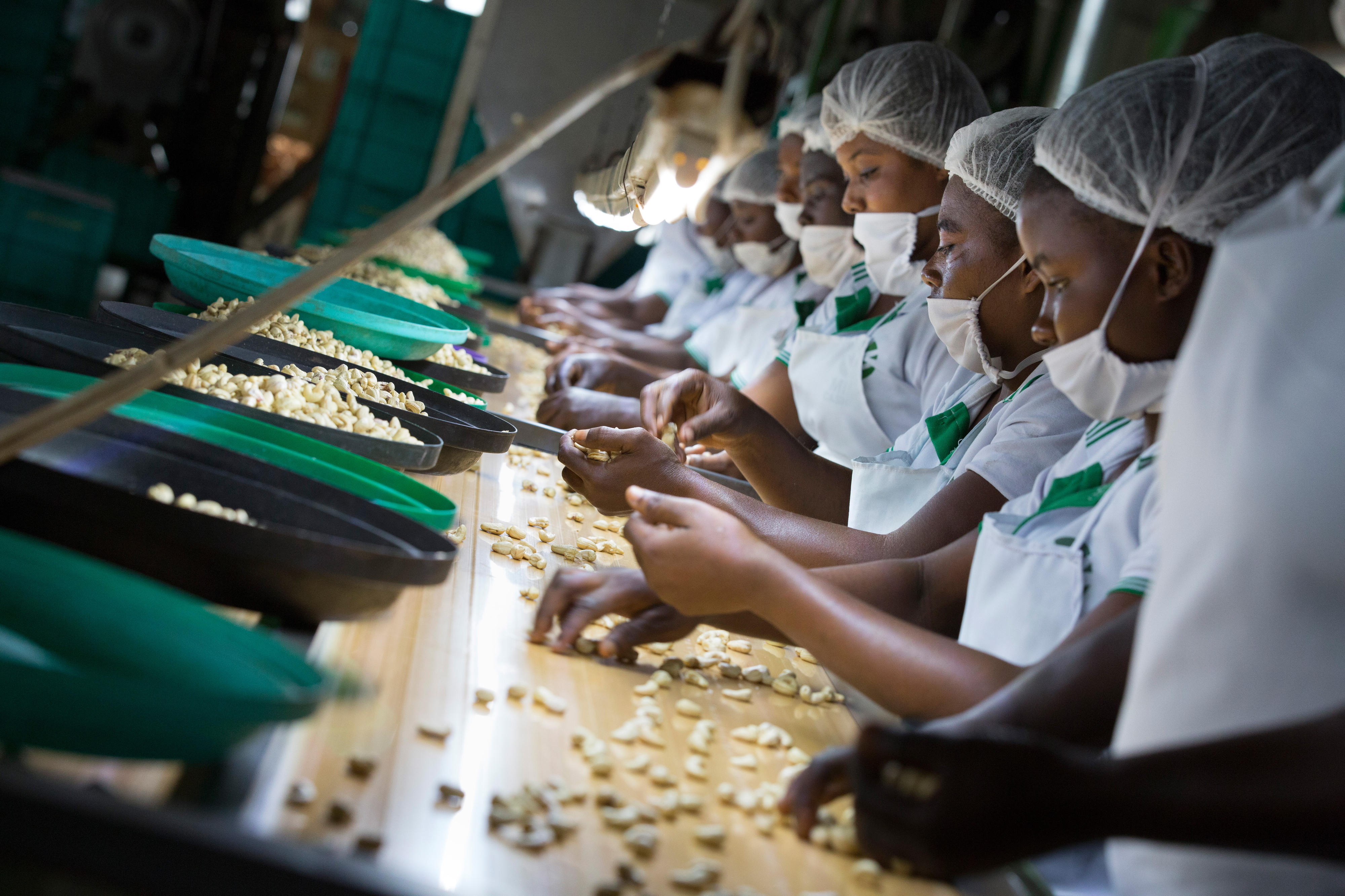 Cashew-Verarbeitungsunternehmen in Ghana