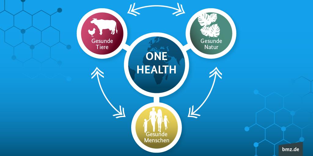 Grafische Darstellung des One-Health-Ansatzes: One Health steht im Mittelpunkt und hat Wechselwirkungen mit gesunden Menschen, gesunden Tieren und gesunder Natur.