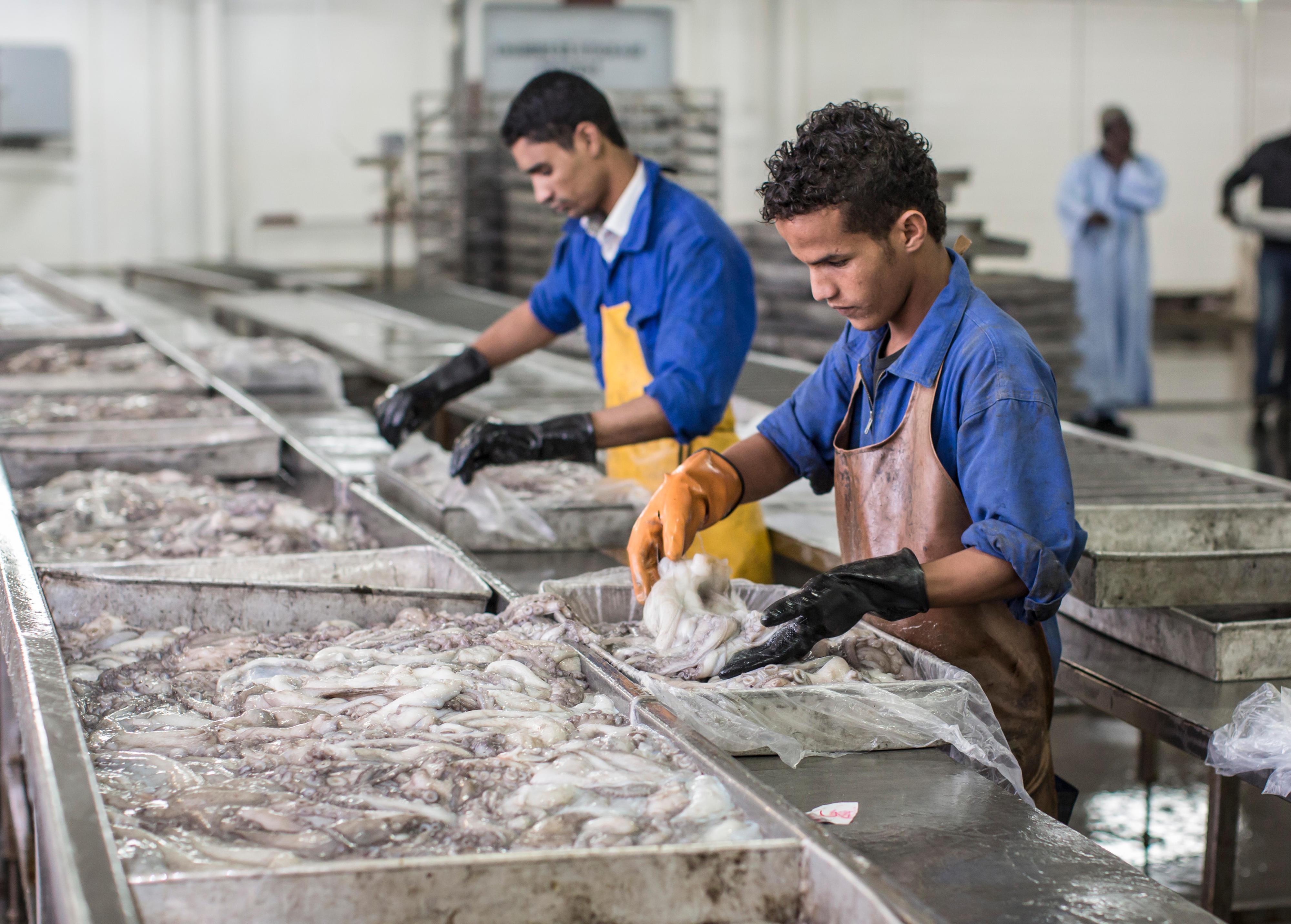 Arbeiter in einer Fischfabrik im Hafen von Nouadhibou, Mauretanien