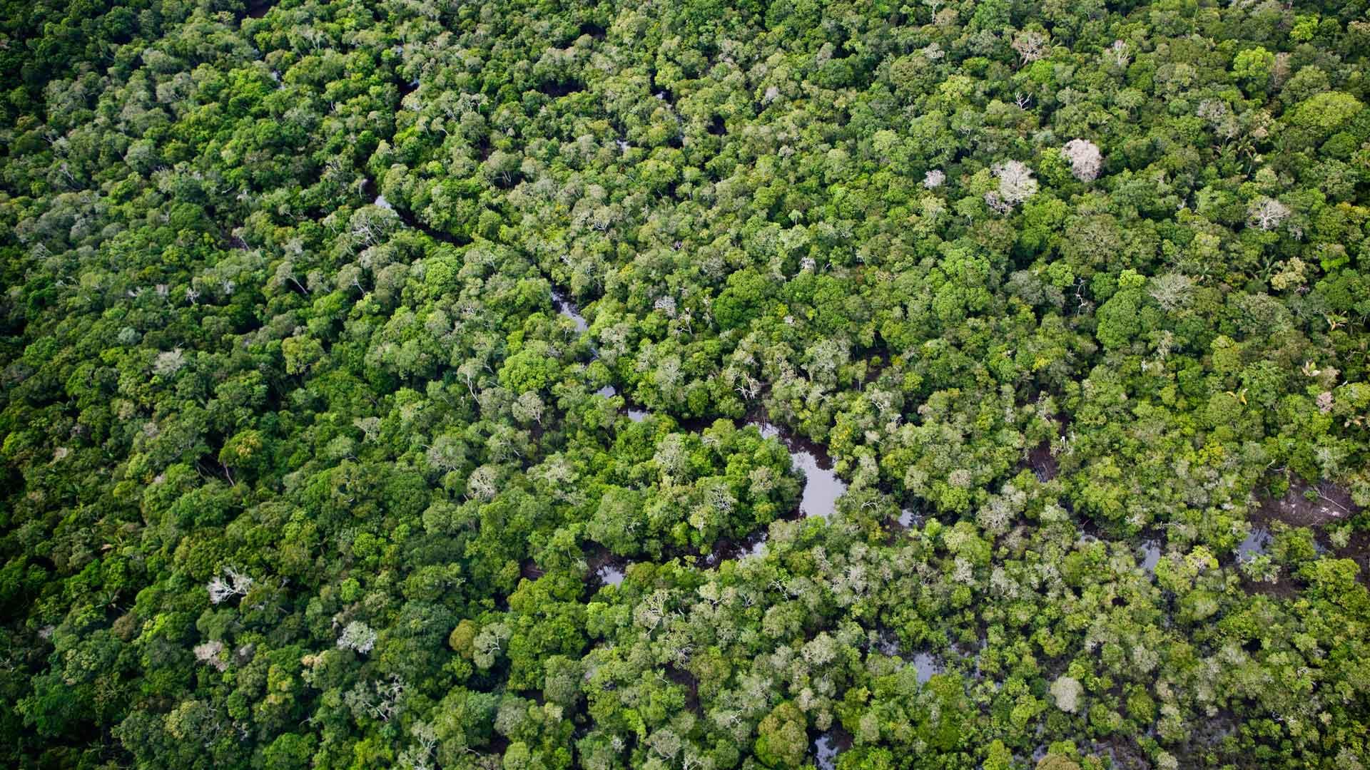 Luftaufnahme eines Regenwaldes