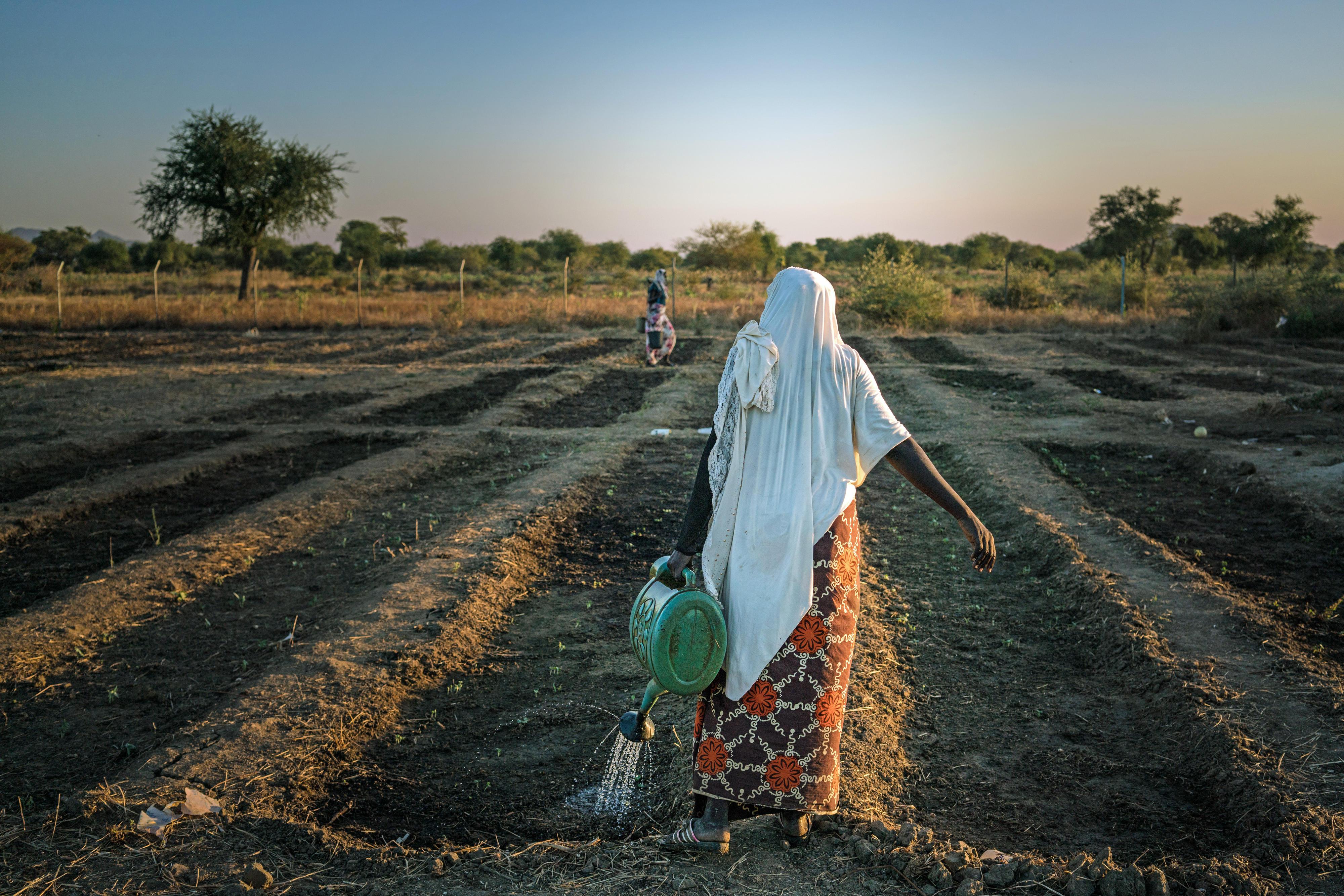 Der vom WFP finanzierte Gemeinschaftsgarten in Bandaro (Tschad) unterstützt Menschen, die von Ernährungsunsicherheit betroffen oder bedroht sind, dabei, ihren Lebensunterhalt zu bestreiten. Die geernteten Produkte werden unter anderem für die lokale Schulspeisung genutzt.