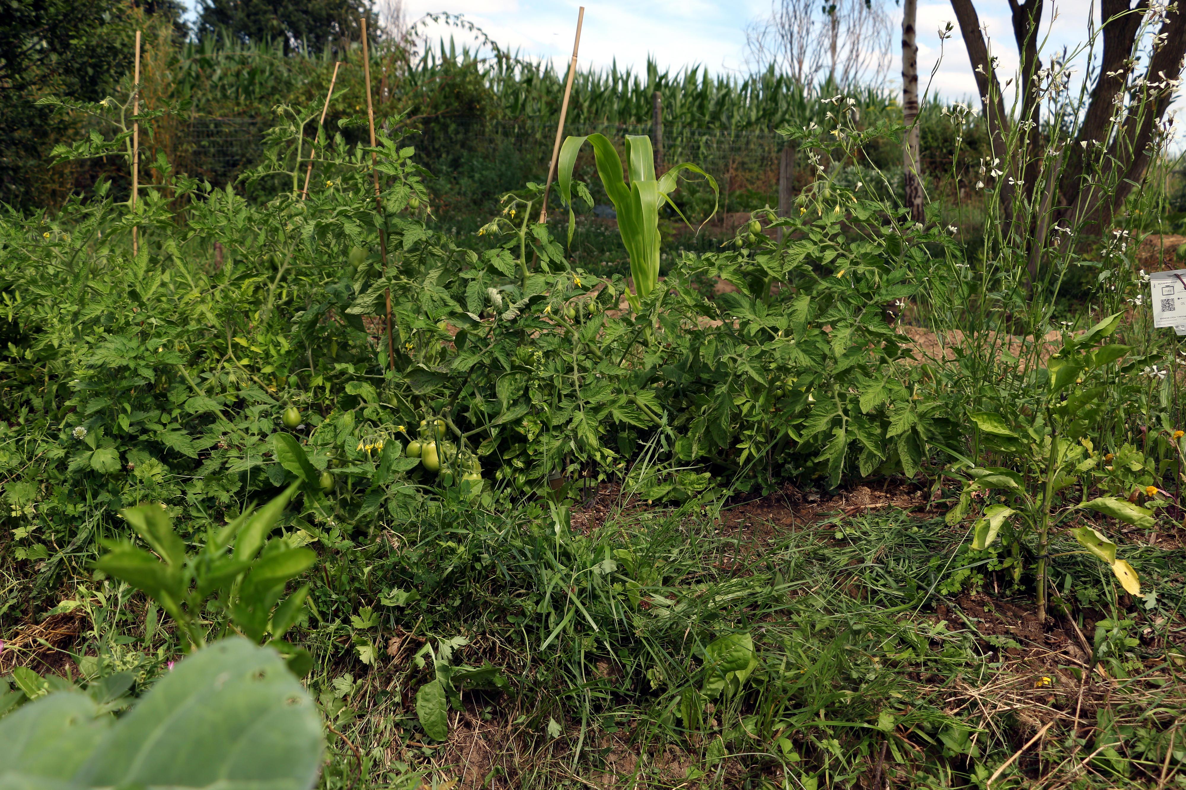 Permakultur-Beet mit verschiedenen Nutzpflanzen