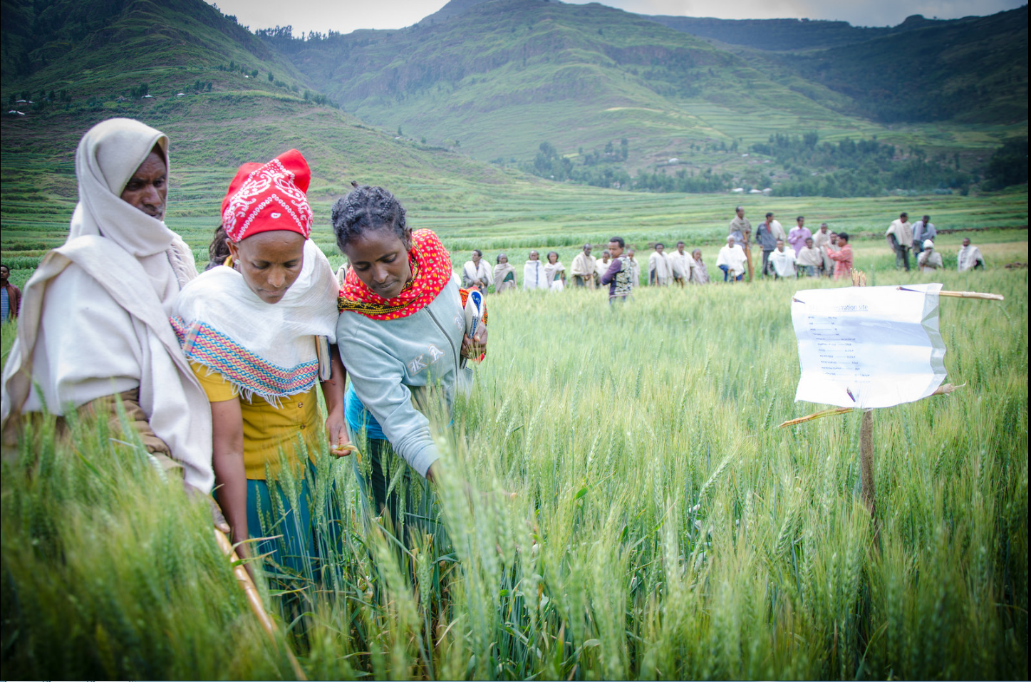 Äthiopische Kleinbäuerinnen und Kleinbauern erhalten auf Trainingsfeldern Schulungen.