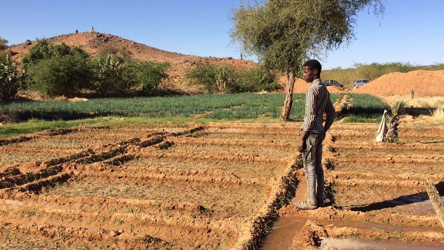 Bewässerungsparzellen in der Region Agadez, Niger
