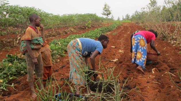 Frauen bei der Aussaat von Bohnen